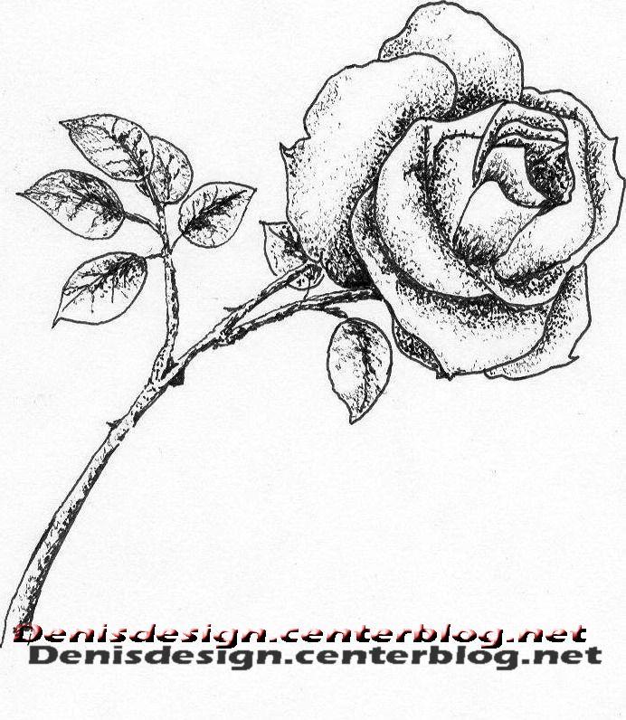 Dessin crayon feutre rose - Roses dessins ...